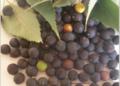 Frutat Caraci