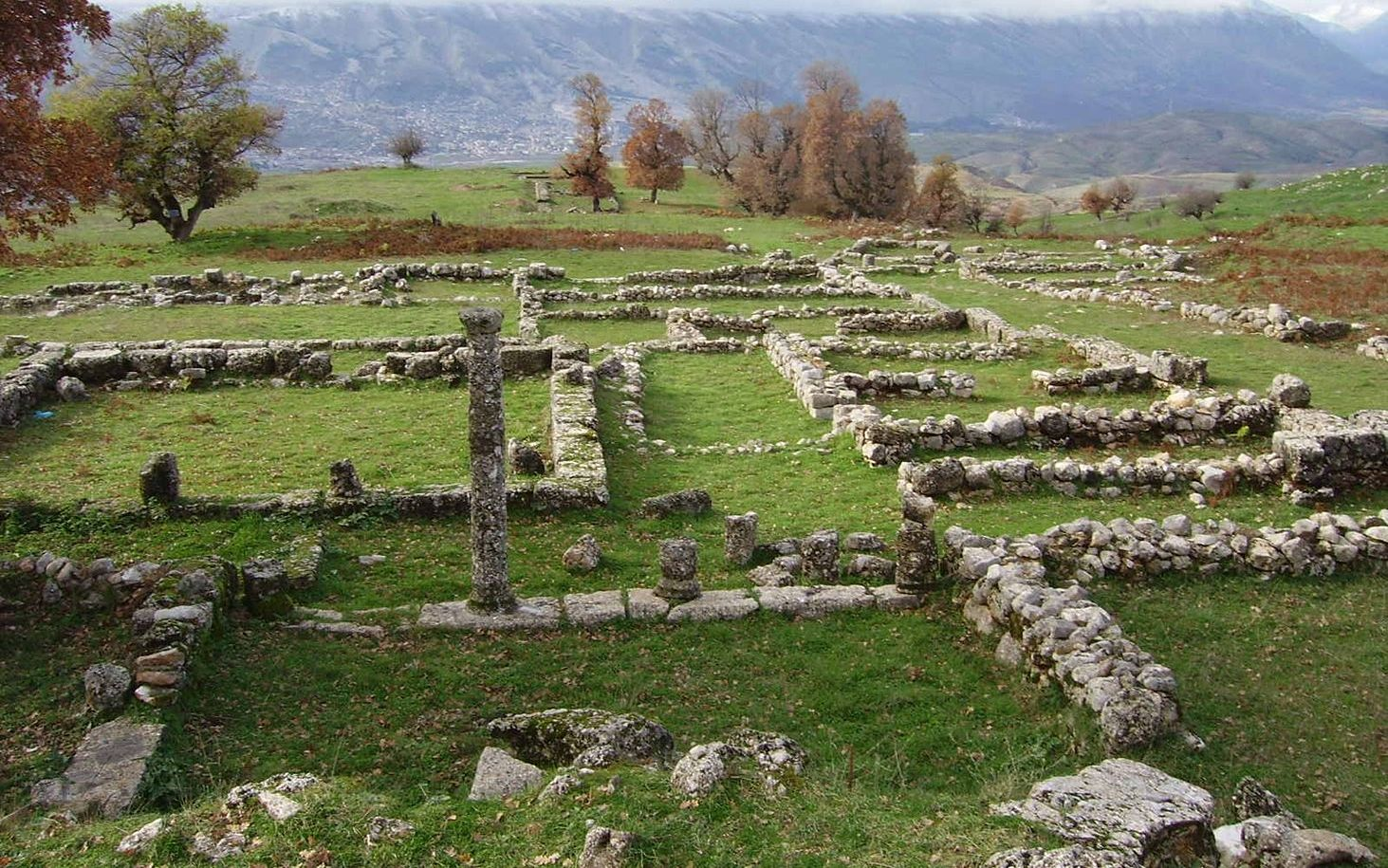 Antigonea